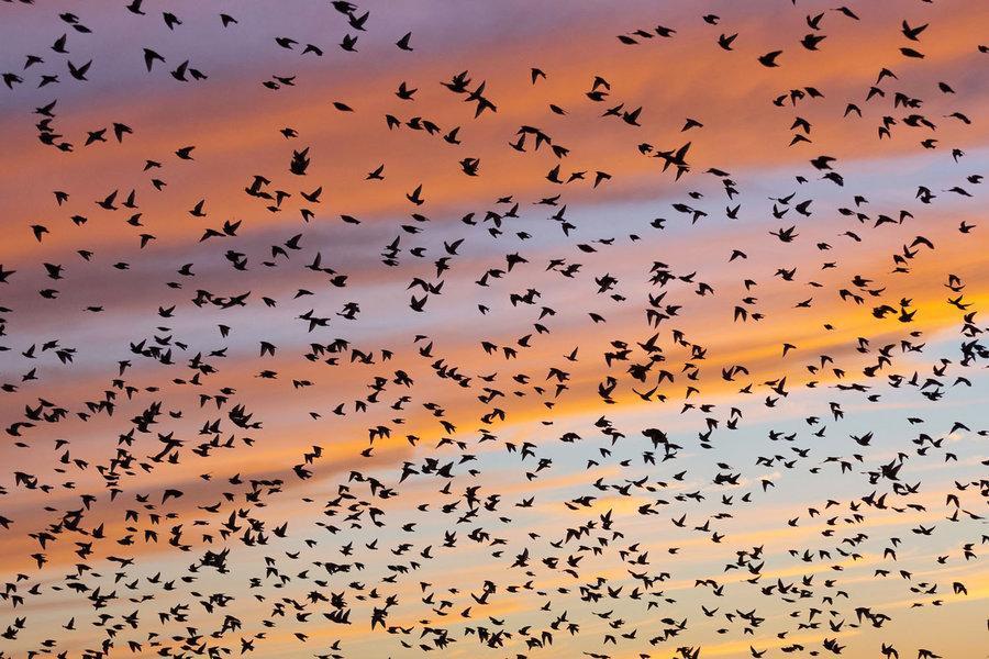 عوامل تهدید پرندگان مهاجر کدام ها هستند؟
