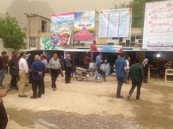 جشنواره گل محمدی در روستای منشاد شهرستان مهریز برگزار گردید